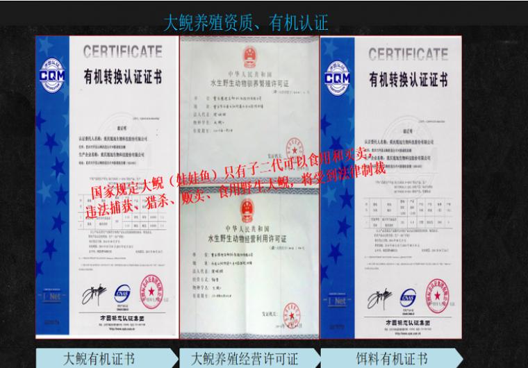 【有机认证-三峡大鲵】全国可送鲜活大鲵